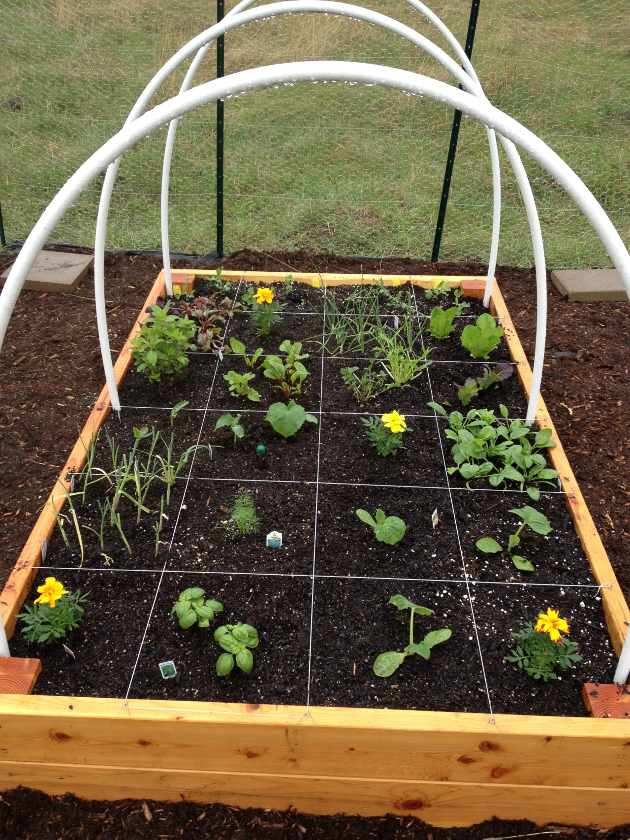 Polebridge, MT: Square Foot Gardening