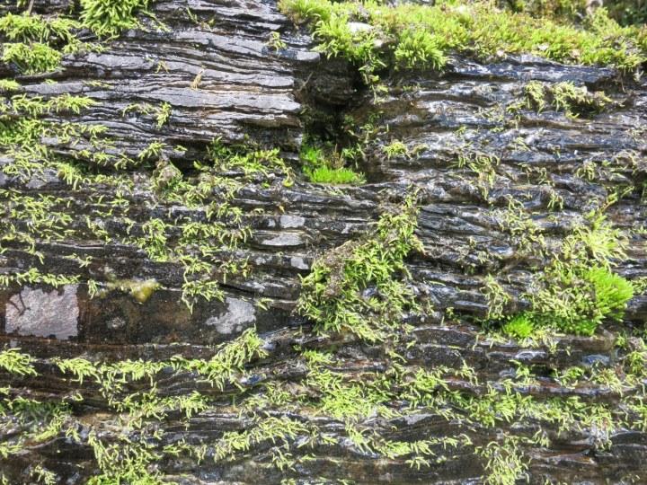 Moss on rocks GNP