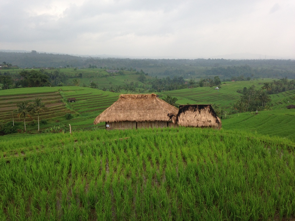 Hut in field