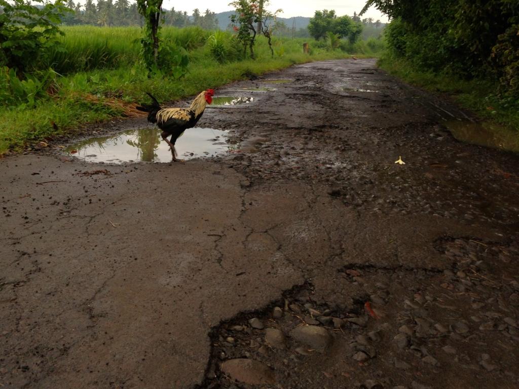 rooster cross road