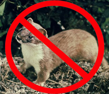 No Stoats