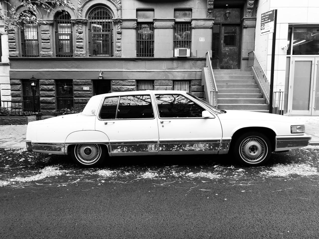 NYC: An UrbanSafari