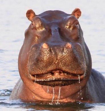 Botswana #3: Real Men andMan-Eaters
